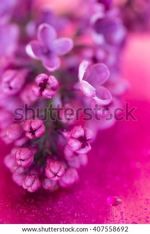 branch of lilac flowers on purple background with drops of water. shallow depth of field. - stock photo