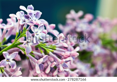 Branch of lilac flowers with the leaves - stock photo
