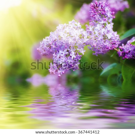 Branch of lilac flowers with the leaves,  vintage retro hipster image with sunshine and water reflection, seasonal spring holiday background - stock photo