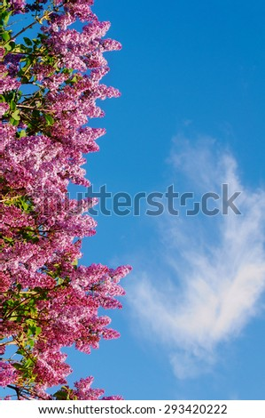 Branch of purple blooming lilacs on the background of blue sky with copyspace - stock photo