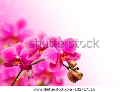 Branch of purple orchid flower on blurred bokeh background with free copyspace place - stock photo