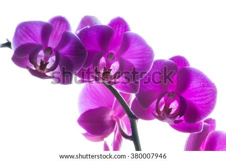 Branch of purple orchids on white, selective focus