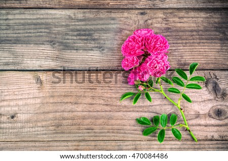 branch of red rose on wooden background