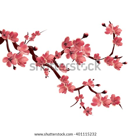 Branch of rose blossoming sakura . Japanese cherry tree.  Isolated Illustration on white background