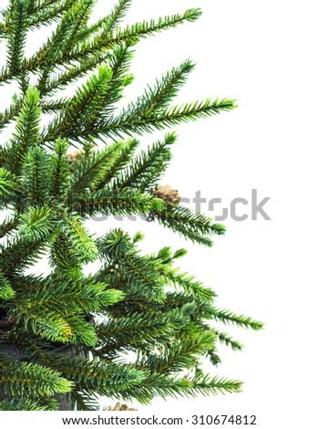Branch of spruce Christmas tree with cones isolated on white - stock photo