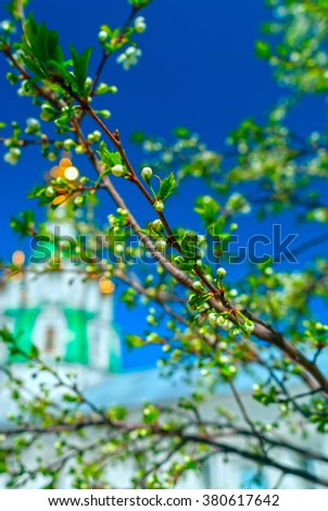 Branch of the apple tree blossoms against white church in summer sunny day - stock photo