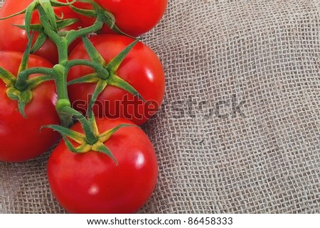Branch of tomatoes on sacking material