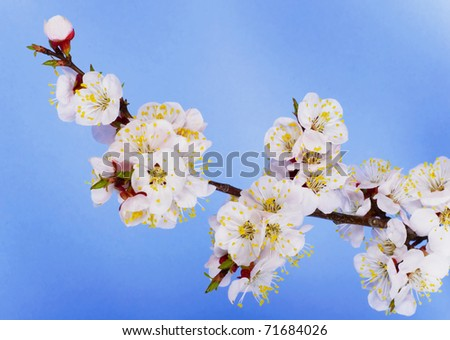 branch of  tree blossoming by pink - stock photo