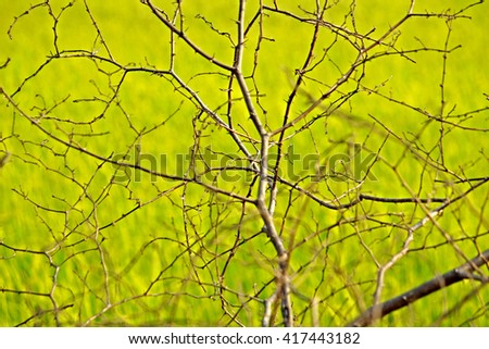 Branch on green background - stock photo
