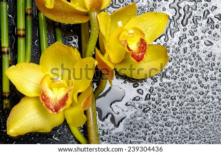 branch orchid with bamboo grove on wet  - stock photo