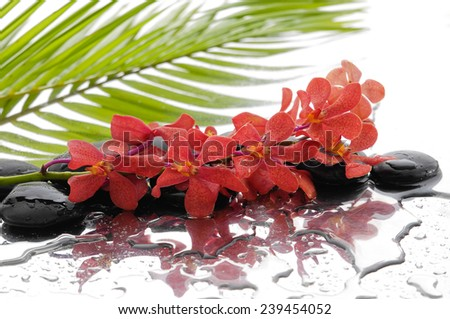 Branch orchid with black stones with green palm background - stock photo