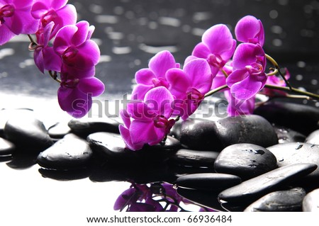 Branch purple orchid flower with therapy stones - stock photo