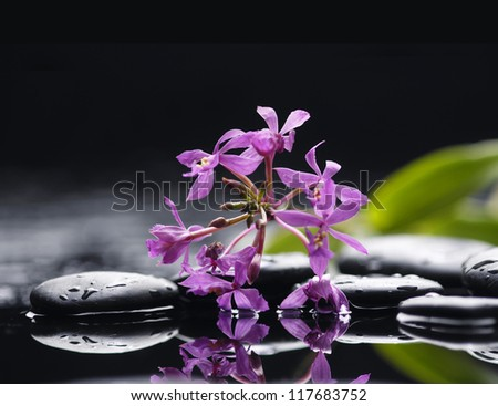 Branch red orchid flower and stone with green plant in water drops