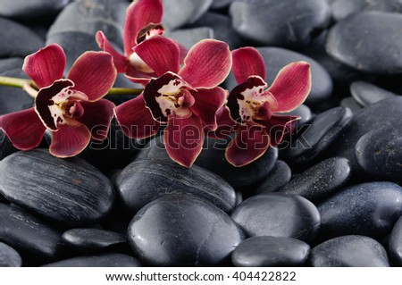 Branch red orchid on pebbles- background - stock photo