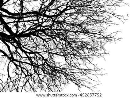 Branch silhouette on a white background.