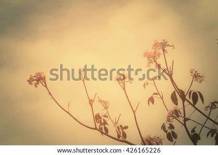 Branch with flowers and sky wallpaper background, process vintage tone