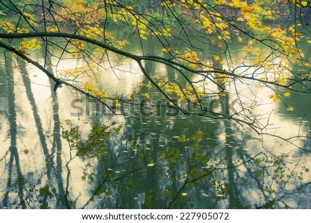 Branch with gold autumn leaves above flowing river water - stock photo