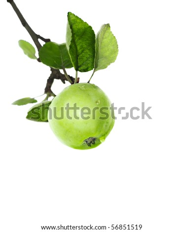 Branch with green apple over white. Shallow depth of field - stock photo