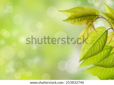 Branch with green leaves and sun rays. Area for text.