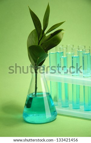 branch with green leaves in test-tubes on green background