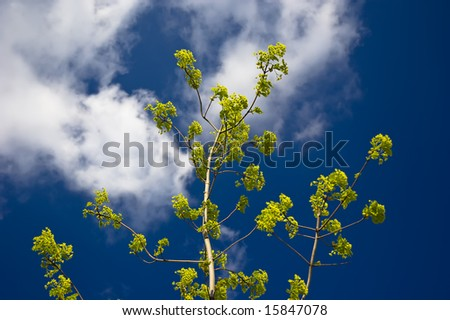 Branch with green leaves on blue sky background - stock photo