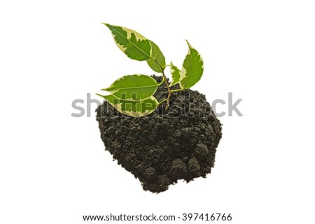 Branch with leaves planted in the ground isolated on white background - stock photo