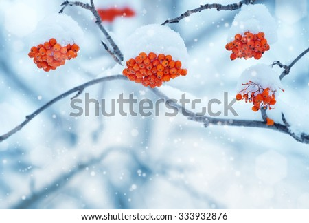 Branch with mountain ash clusters in snow - stock photo