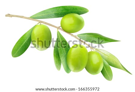 Branch with olives and leaves isolated on white - stock photo