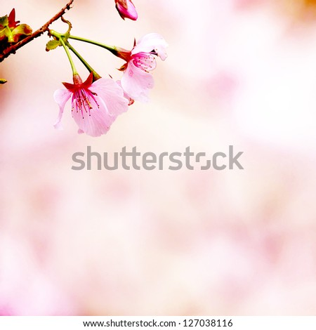 Branch with pink blossoms. Natural background - close up with shallow DOF. - stock photo