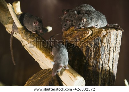 branch with three mice