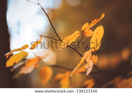 Branch with yellow leaves. Autumn concept. - stock photo