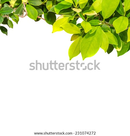 branches,green leaf isolated on white background - stock photo