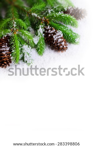 Branches green spruce with cones on snow on white background - stock photo