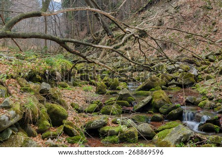 Branches in mossy land - stock photo
