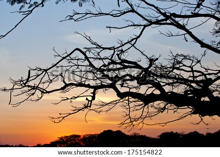 Branches in silhouette