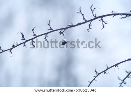 branches in winter forest
