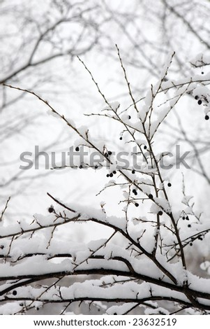 Branches of a berry bush in winter wood