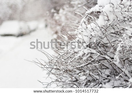 Branches of a bush and dry leaves under the snow. Winter background.