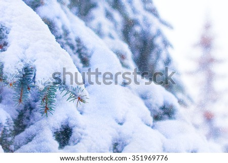 branches of a Christmas tree covered with snow natural spruce winter snowfall background