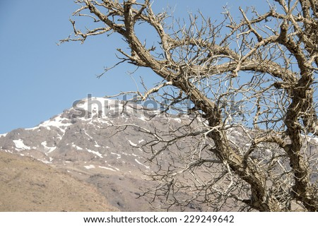 Branches of a dead tree in the front and a big mountain with a snow tip in the horizon, in Tislday, Morocco. - stock photo