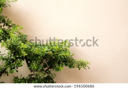 Branches of a small tree or shrub against a beige wall. - stock photo
