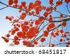Branches of ash berry in the ice - stock photo