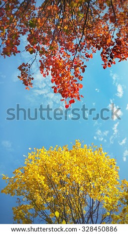 Branches of beautiful yellow and red autumn tree on blue sky background - stock photo