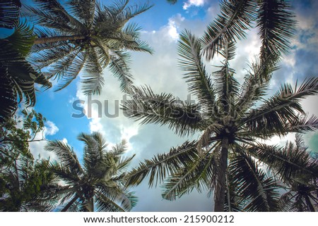 branches of coconut palms under blue sky and clouds - stock photo