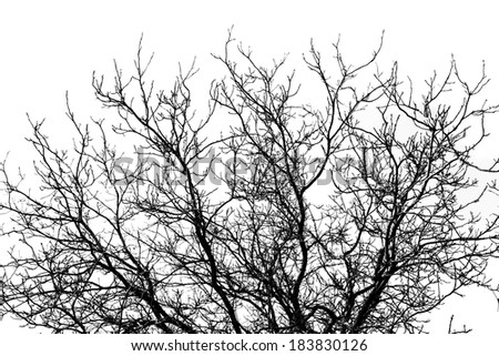 branches of dead tree silhouette on white background - stock photo