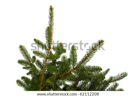 Branches of fir tree isolated on white background.