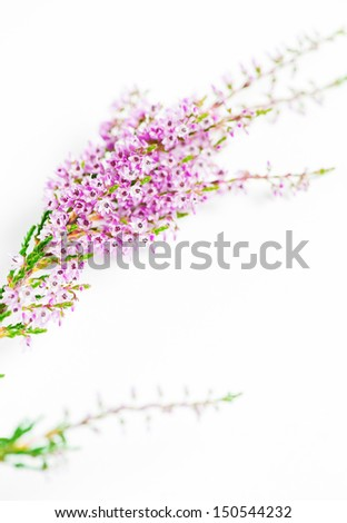 Branches of heather  - stock photo