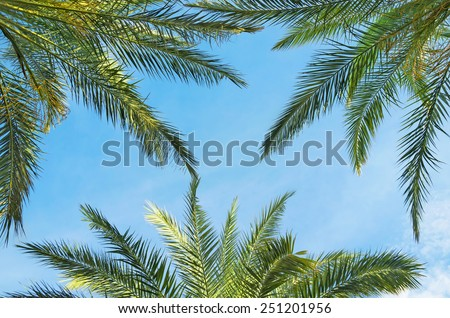 Branches of palm trees against a blue sky - stock photo