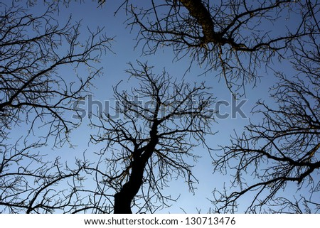 Branches of several trees - stock photo