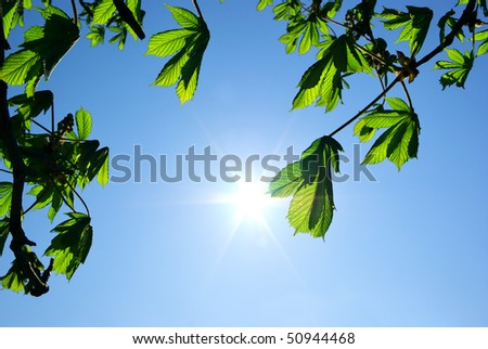 Branches of tree and sun. Element of design. - stock photo